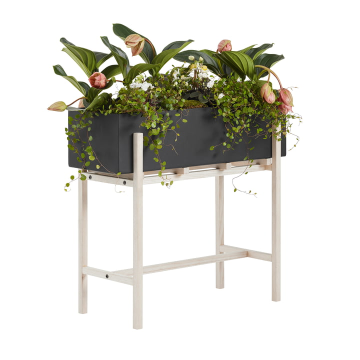 The Botanic Stand from Design House Stockholm , black / nature