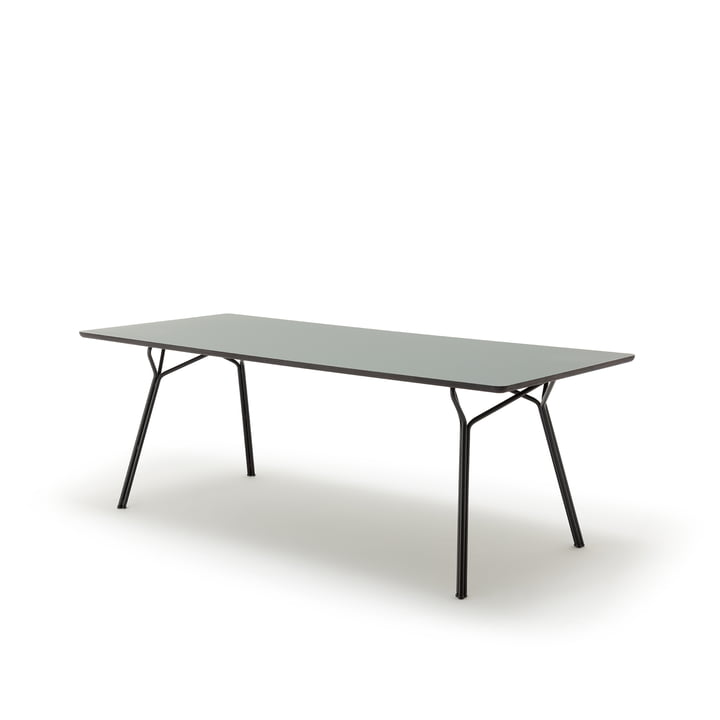 120 -201 Dining table, 160 x 90 cm by freistil in grey olive