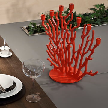 Red branches for seven candles