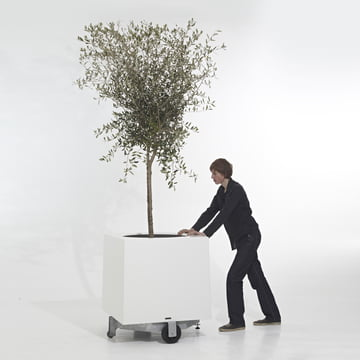 Extremis - Alea Planter