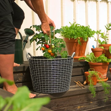 Wire Basket with Plant Bag for Tomatoes