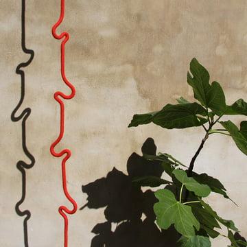 Roberope, plant