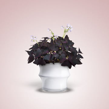 Karen Blixen Vase