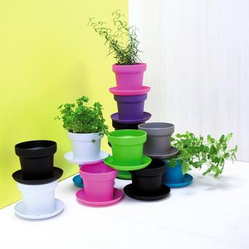 Authentics - Green plant pot, colours - group