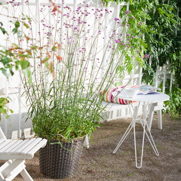 Korbo - Classic 65, Ambience image: planted