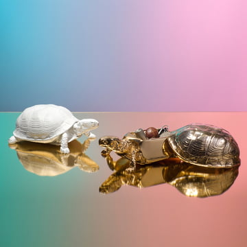 Areaware - Turtle Box, white, gold