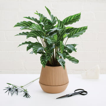 Umbra - Pleated Planter, Eartenware