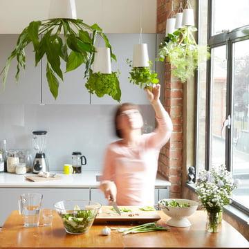 Hanging Herb Garden in the Kitchen