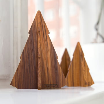Small teak wood forest