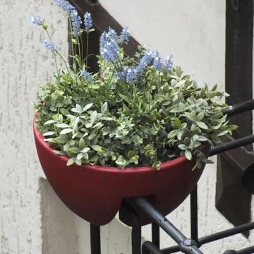 rephorm - Eckling Planter, bordeaux