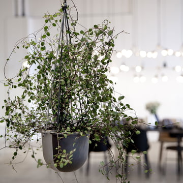 Menu - Hanging Vessel Ceramic Planter