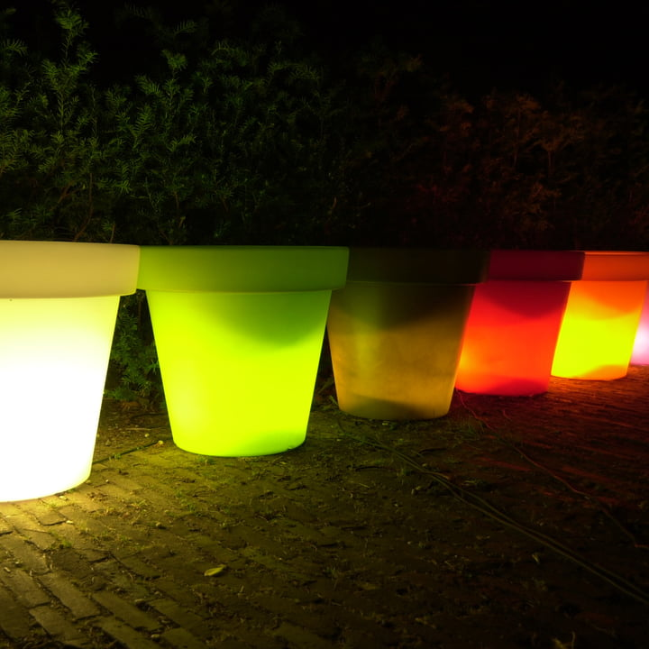 Bloom Pot with light
