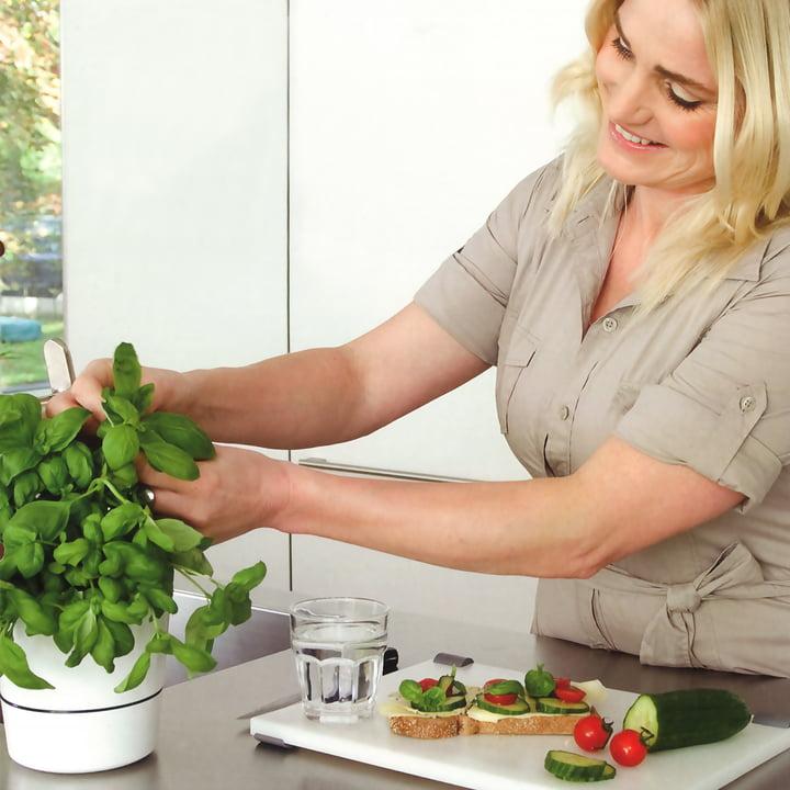 Rosti Mepal - Hydro Herb pot - Ambience