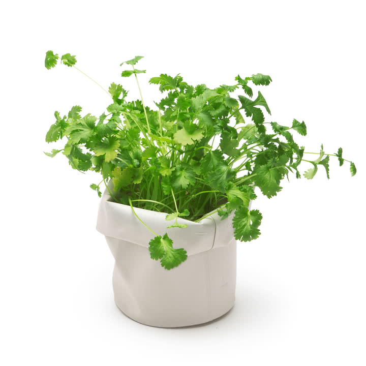 A place for the kitchen herbs