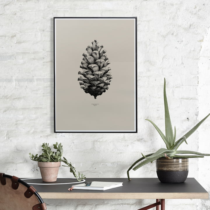 Paper Collective - Nature 1:1 Pine Cone (sand)