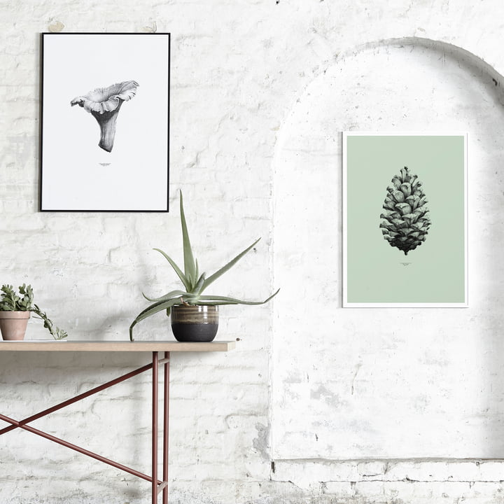 Paper Collective - 1:1 Chanterelle (white) / 1:1 Pine Cone (mint green)
