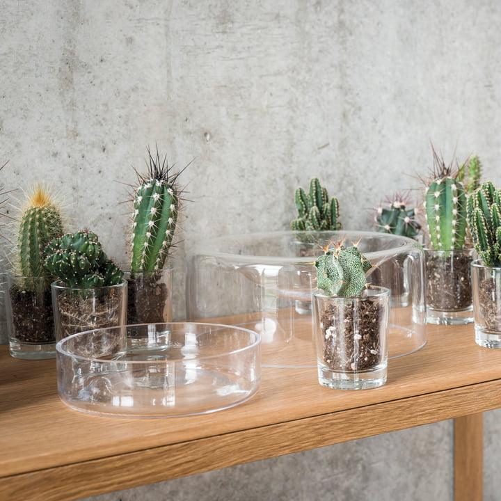 Jar Glass Bowl by Schönbuch