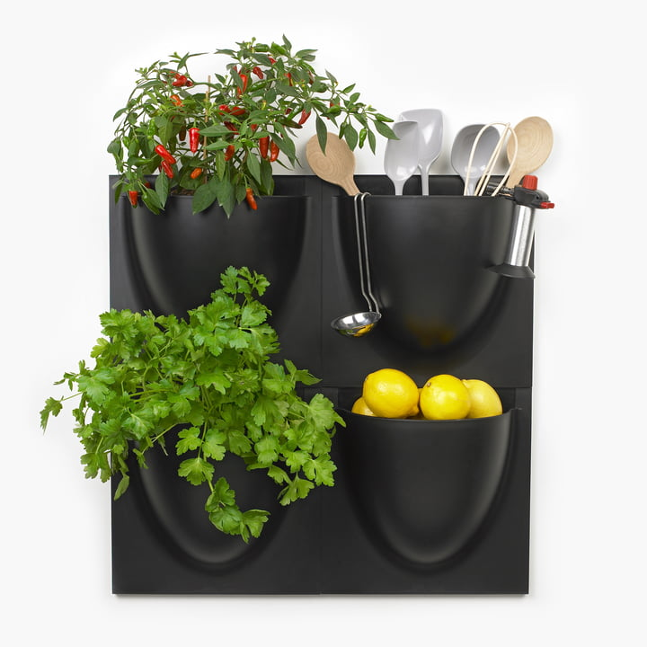 Wall Pot by VertiPlants in Black