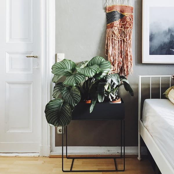 Pinterest Trend 2017 Indoor Plants